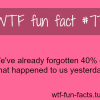 memory facts