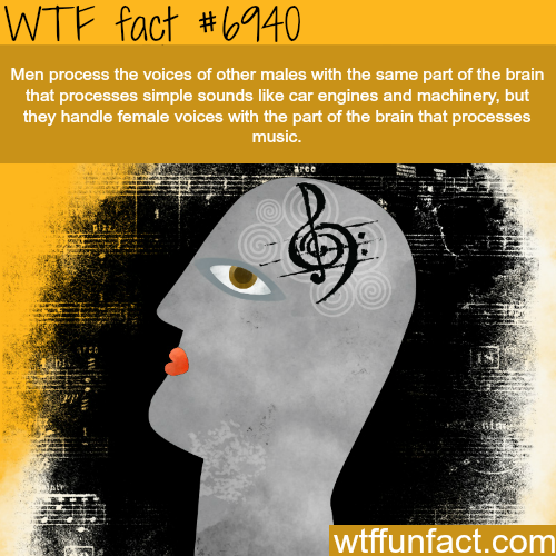 Men process women's and men's voices differently - WTF fun fact