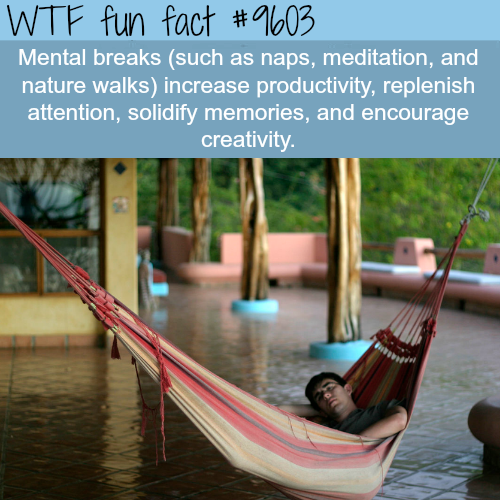 Mental Breaks - WTF fun fact