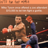 mike tyson wanted to fight a gorilla wtf fun