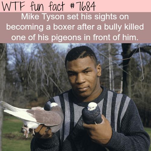 Mike Tyson - WTF fun fact