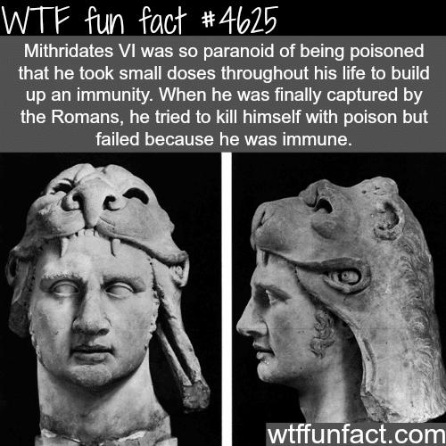 Mithridates VI - WTF fun facts