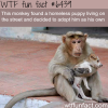 monkey adopts a puppy wtf fun facts