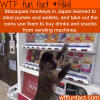 monkey in japan learned to steal wallets and use