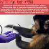monkey using money wtf fun facts