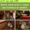 monkey waiters in japan