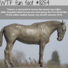 monument to honor the forgotten allied horses