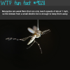 mosquitoes wtf fun facts