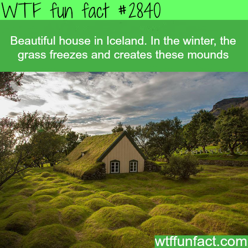 Most beautiful house in Iceland -WTF fun facts
