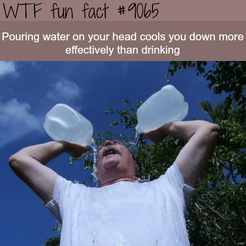Most effective way to cool down- WTF fun facts