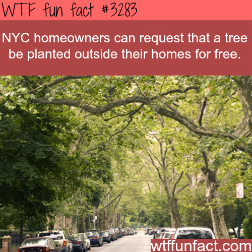 Most NYC homeowners don't know this -  WTF fun facts