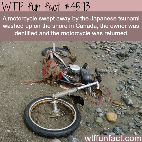 Motorcycle swept away from Japan to a shore in Canada -   WTF fun facts