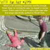 murder in google street view wtf fun facts