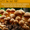 mushrooms wtf fun facts