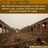 nabi yunus shrine wtf fun facts