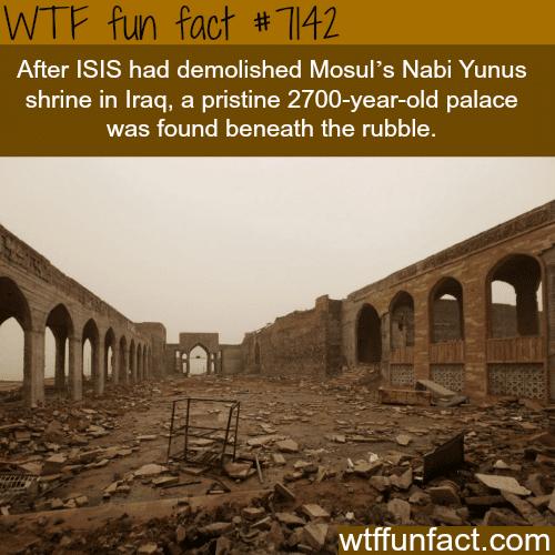 Nabi Yunus shrine - WTF fun facts