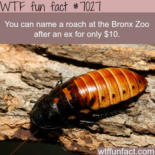 Name a roach at the Bronx Zoo - WTF fun facts