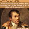 napoleon bonaparte wtf fun fact