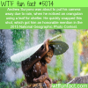 national geographic top photos of 2015 wtf fun