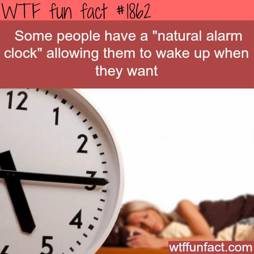Natural alarm clock -WTF fun facts