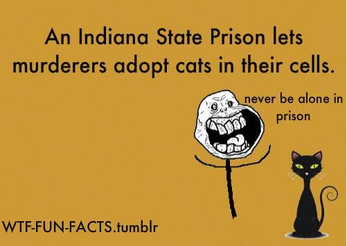 never be alone in prison
