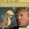new pokemon that looks like donald trump wtf