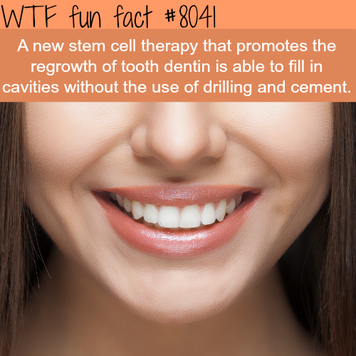 New stem cell therapy can grow teeth and fill cavities - WTF fun facts