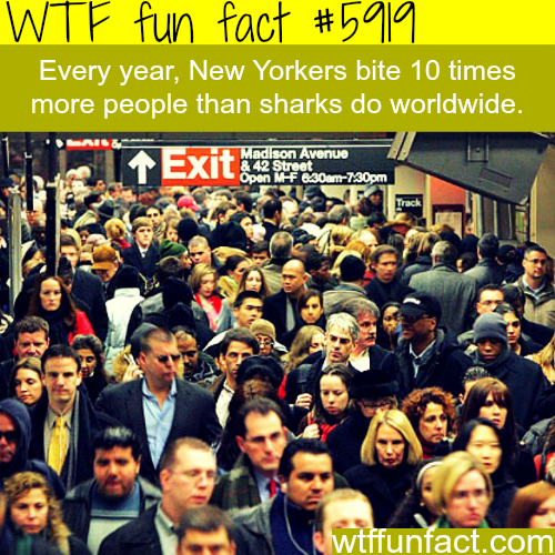 New Yorkers bites more people than sharks - WTF fun facts