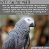 nigel the parrot wtf fun fact