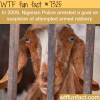 nigerian police arrested a goat wtf fun fact