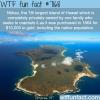 niihau wtf fun fact