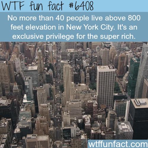 NYC - WTF fun facts