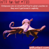 octopuses wtf fun facts