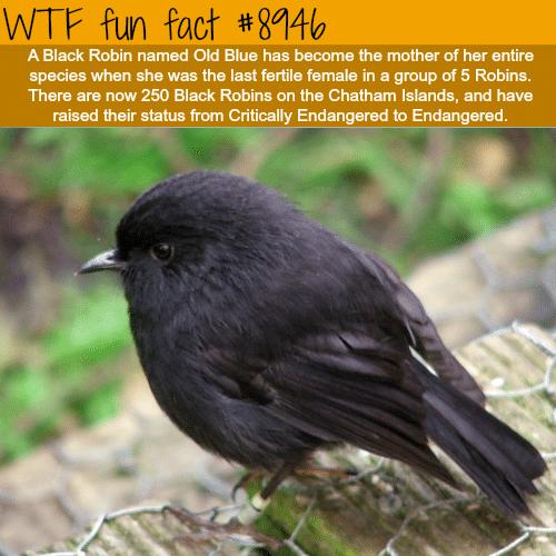 Old Blue - WTF fun fact