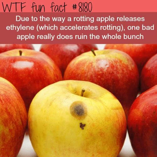 One bad apple - WTF fun fact