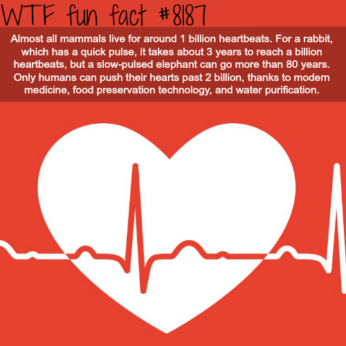 One Billion Heartbeats - WTF fun fact