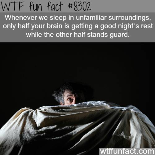 Only half of your brain sleeps when you sleep in unfamiliar surroundings - WTF fun facts
