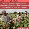 opium cultivation in afghanistan hits record high