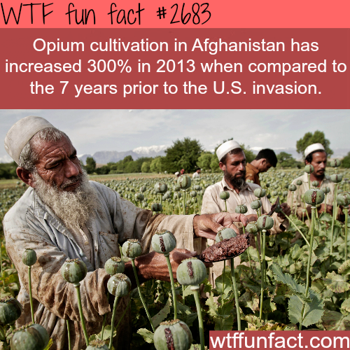 Opium Cultivation in Afghanistan hits record high -WTF funfacts