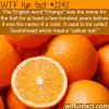 orange fruit or color