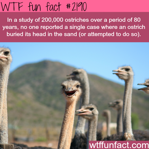 Ostriches facts: Myth busted -WTF fun facts