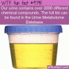 our urine contains over 3000 different chemical