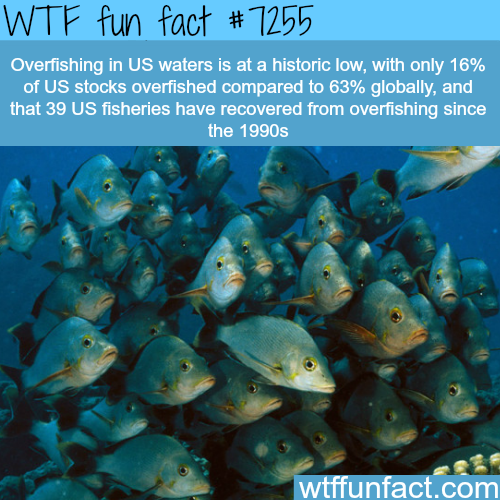 Over-fishing in the USA - WTF fun fact