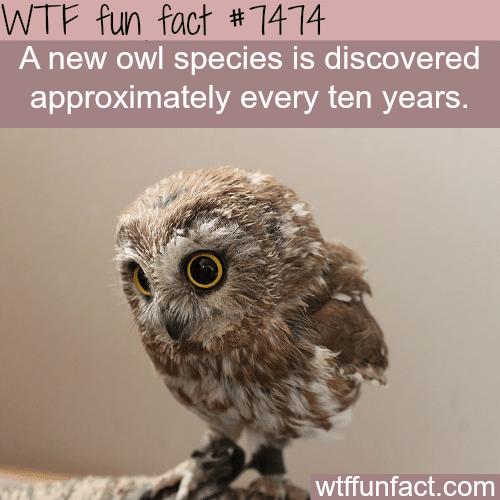 Owl species - FACTS