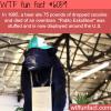 pablo eskobear wtf fun facts