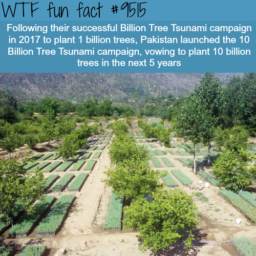 Pakistan's billion tree - WTF fun fact