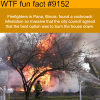 pana illinois wtf fun facts