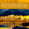 pando the oldest living organism wtf fun facts