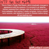 panjin red beach china wtf fun facts
