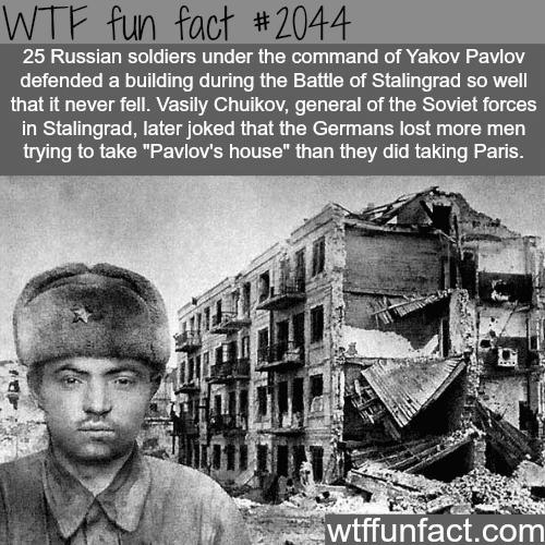 Pavlov's house -WTF fun facts